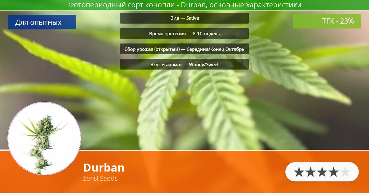 Инфограмма сорта марихуаны Durban