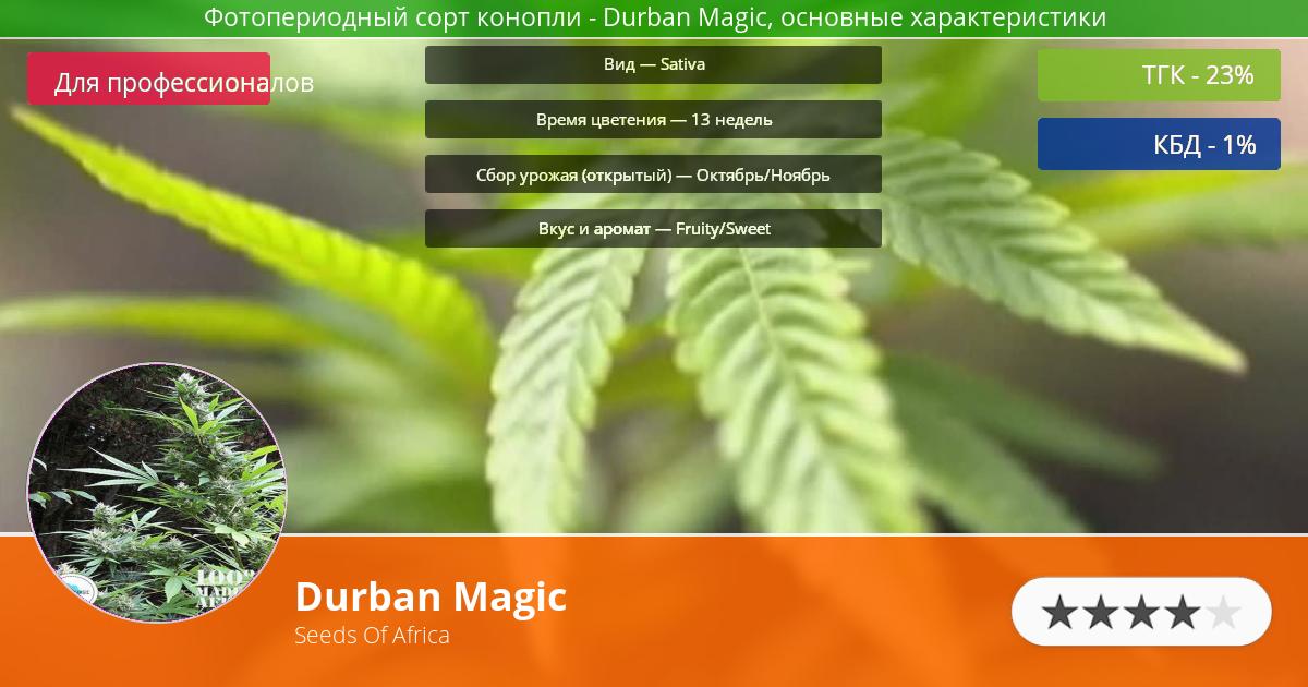 Инфограмма сорта марихуаны Durban Magic