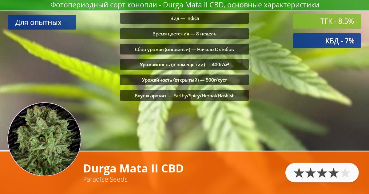 Инфограмма сорта марихуаны Durga Mata II CBD