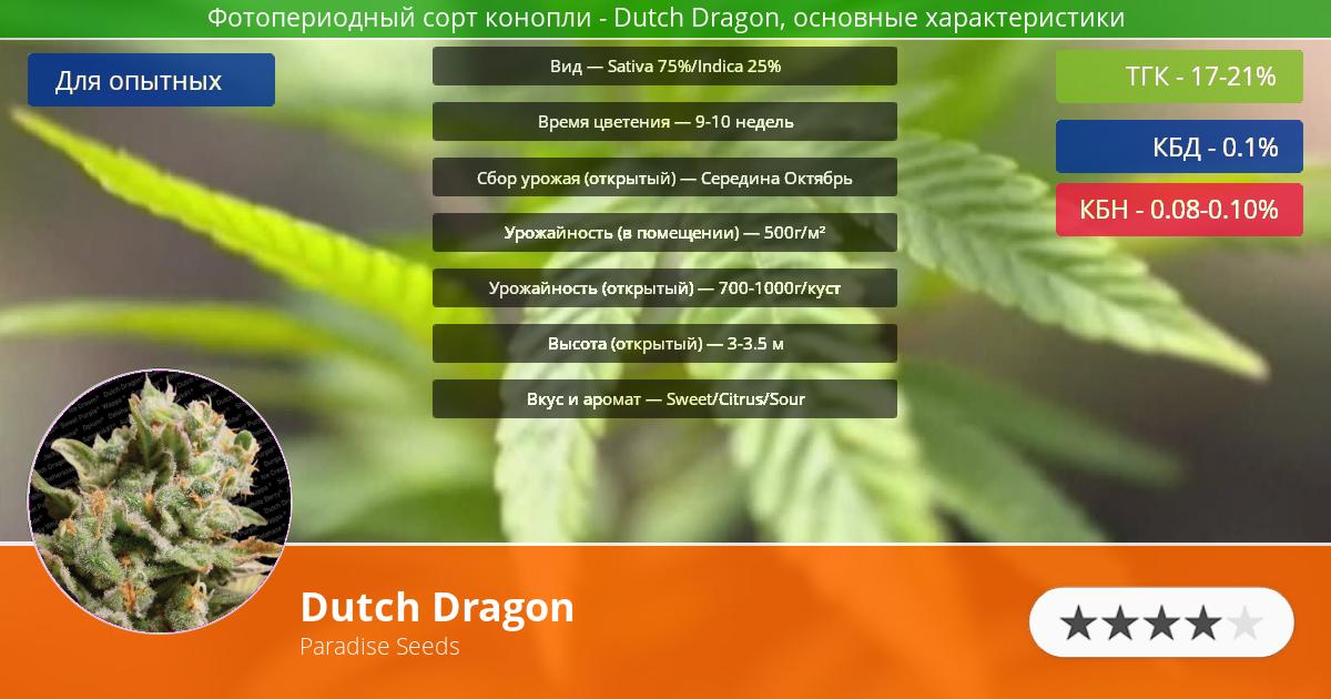 Инфограмма сорта марихуаны Dutch Dragon