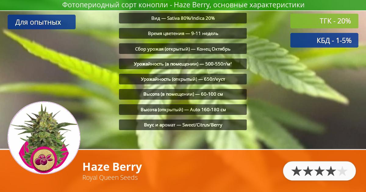 Инфограмма сорта марихуаны Haze Berry