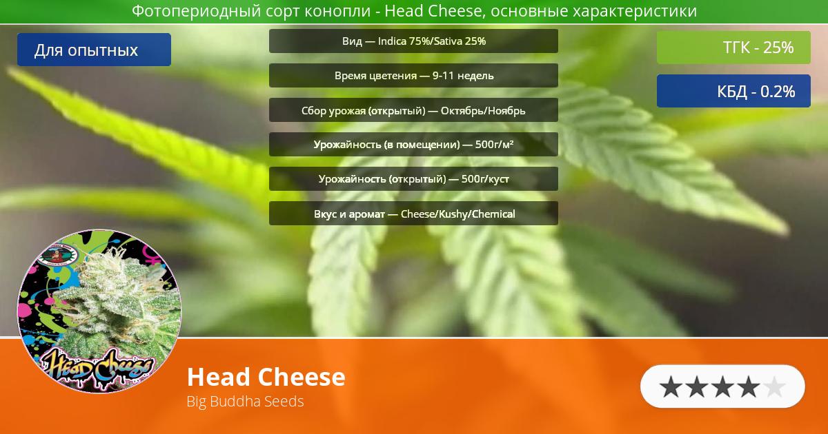 Инфограмма сорта марихуаны Head Cheese