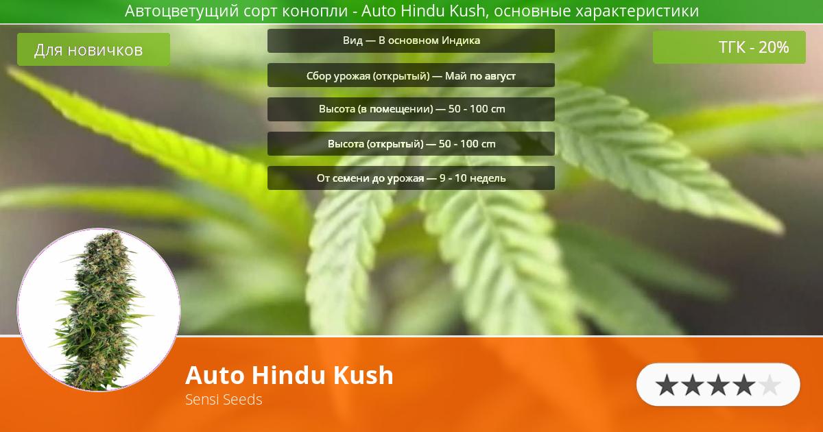 Инфограмма сорта марихуаны Auto Hindu Kush