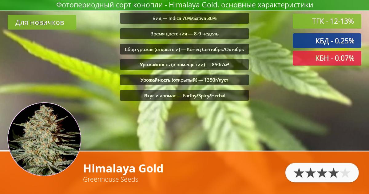 Инфограмма сорта марихуаны Himalaya Gold