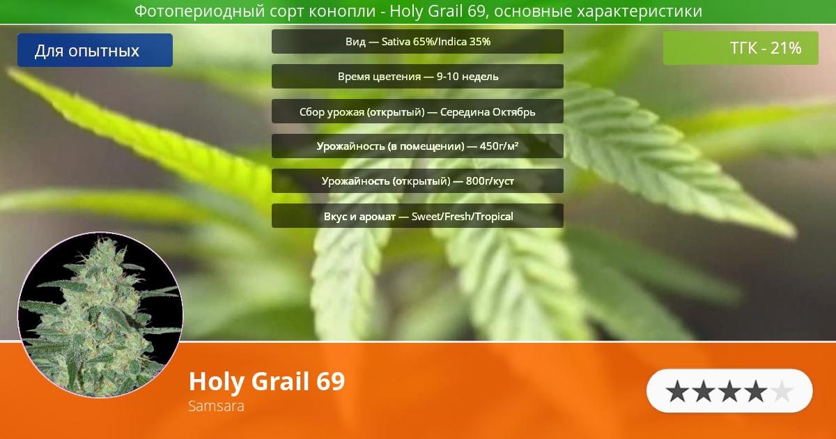 Инфограмма сорта марихуаны Holy Grail 69