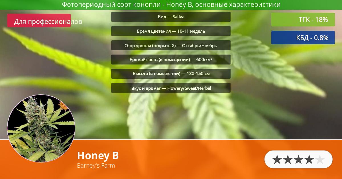 Инфограмма сорта марихуаны Honey B