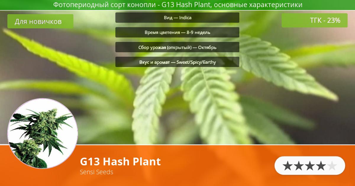 Инфограмма сорта марихуаны G13 Hash Plant