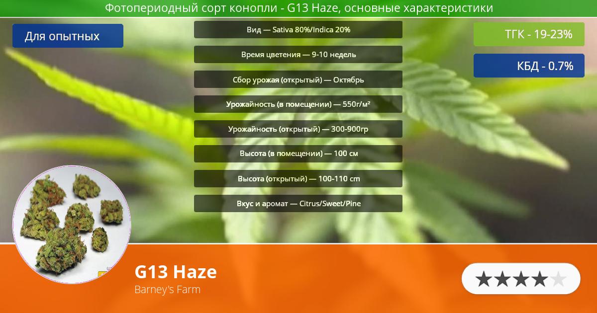 Инфограмма сорта марихуаны G13 Haze