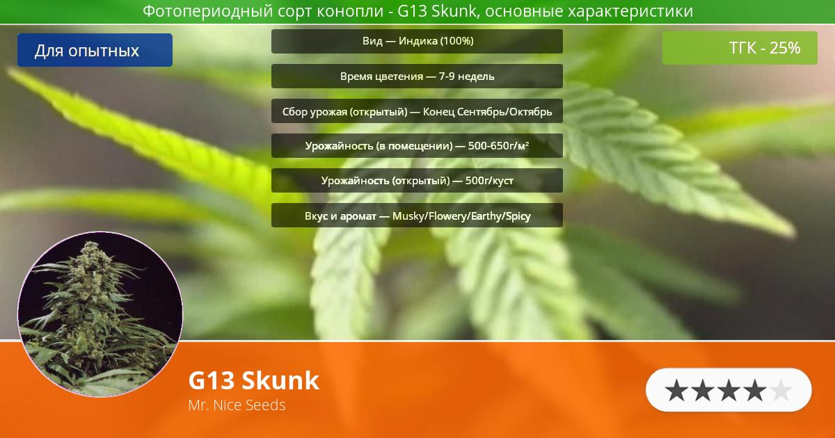 Инфограмма сорта марихуаны G13 Skunk