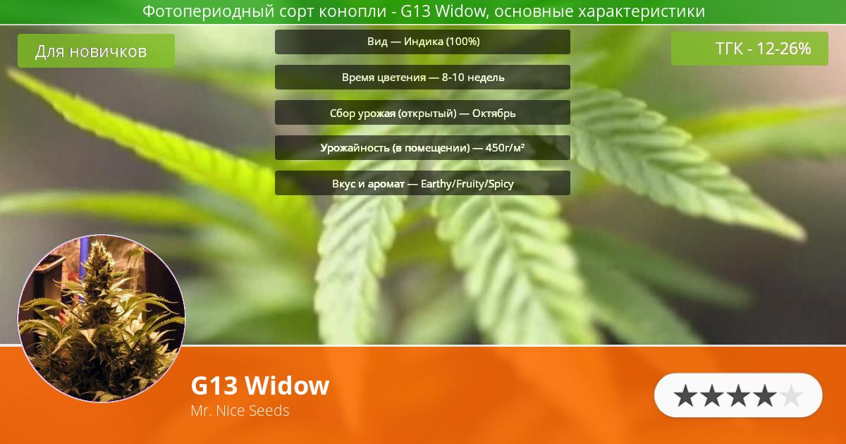 Инфограмма сорта марихуаны G13 Widow