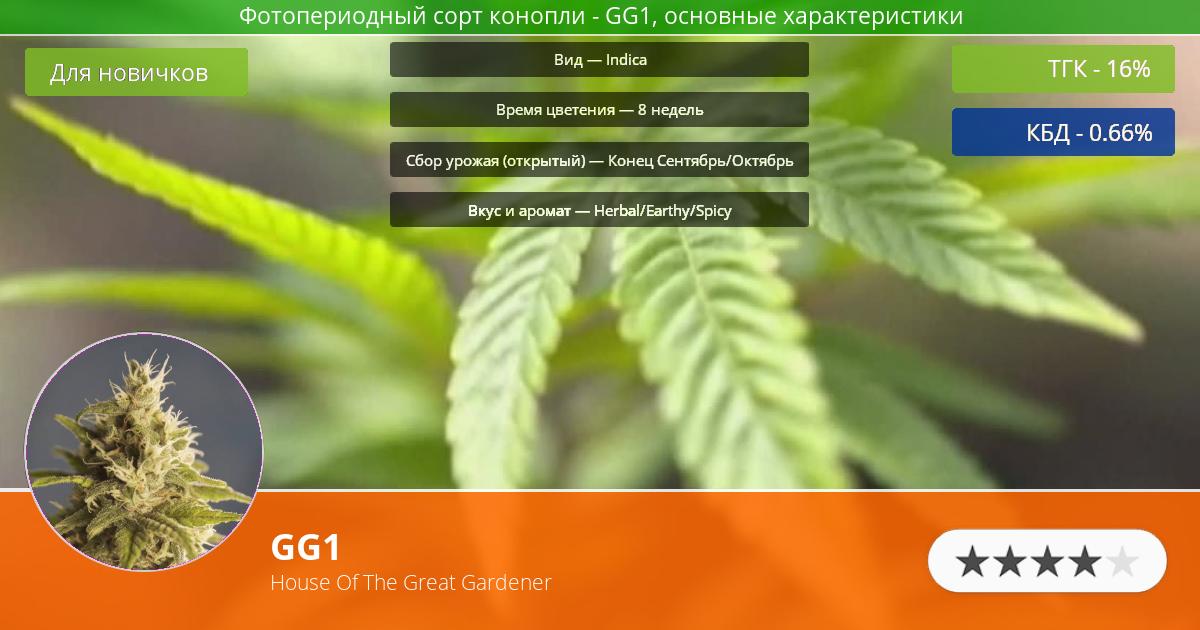 Инфограмма сорта марихуаны GG1