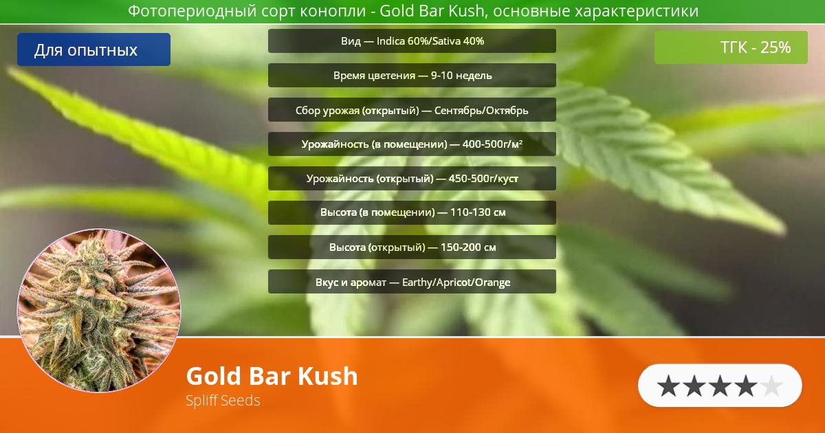 Инфограмма сорта марихуаны Gold Bar Kush