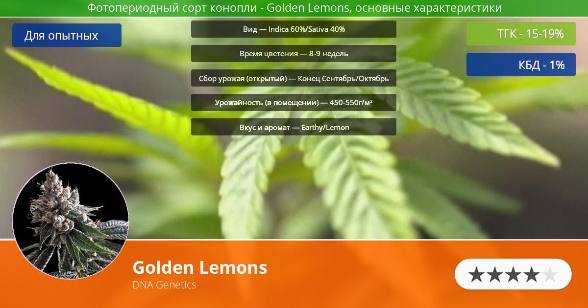 Инфограмма сорта марихуаны Golden Lemons
