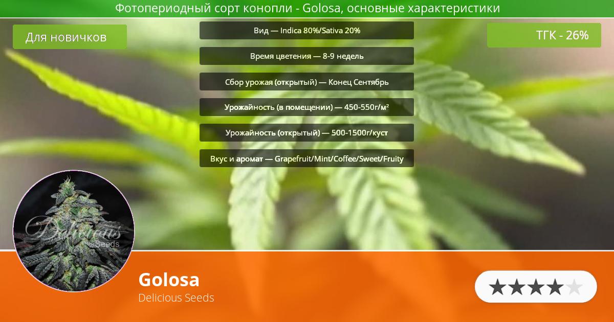Инфограмма сорта марихуаны Golosa