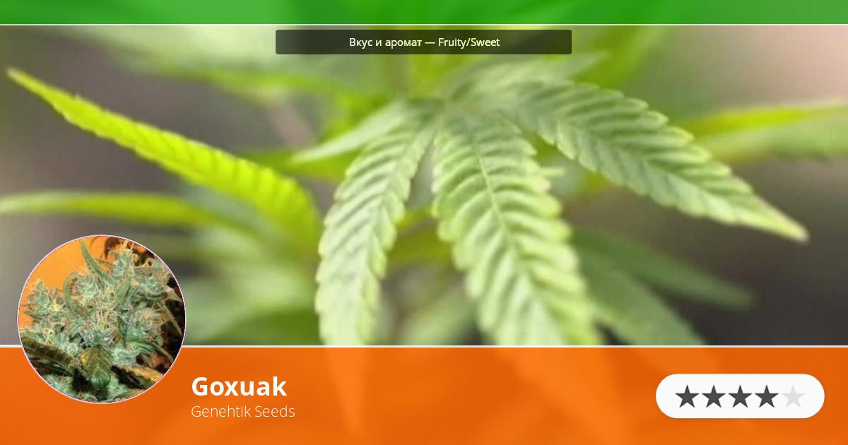 Инфограмма сорта марихуаны Goxuak