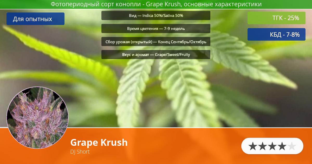 Инфограмма сорта марихуаны Grape Krush