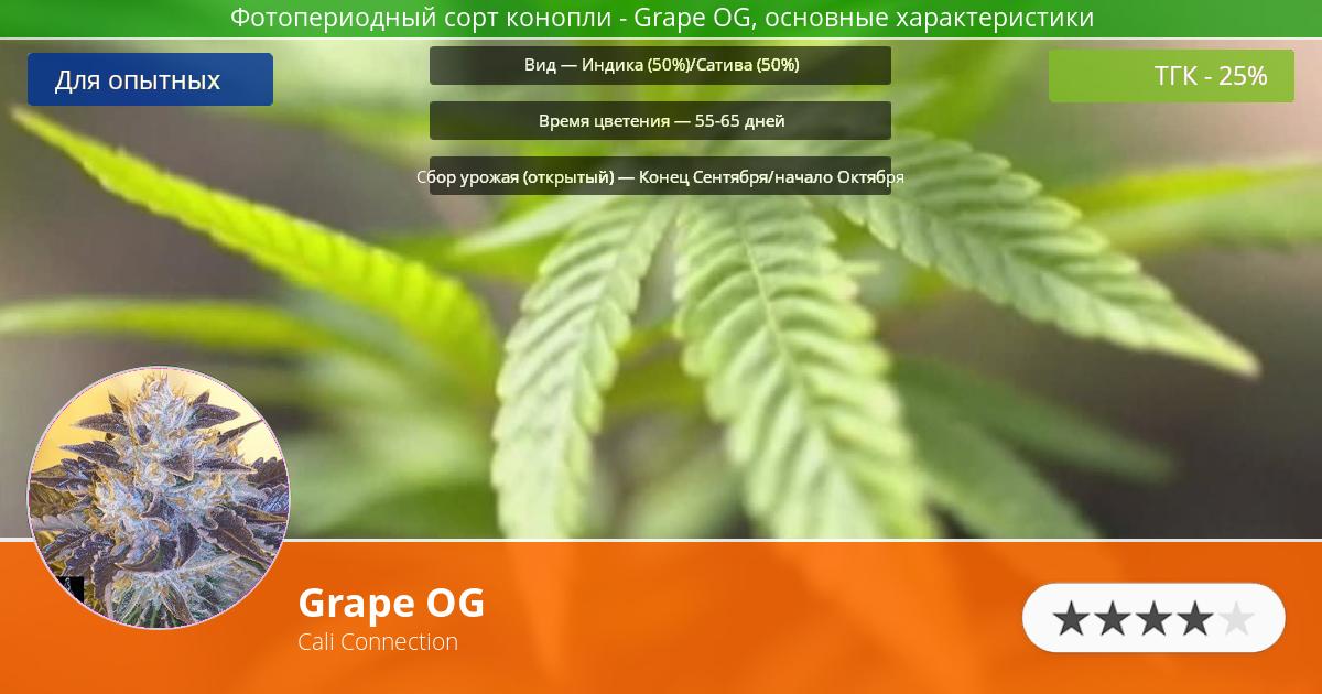 Инфограмма сорта марихуаны Grape OG
