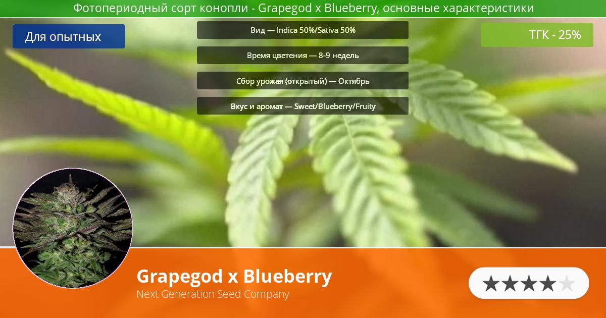Инфограмма сорта марихуаны Grapegod x Blueberry