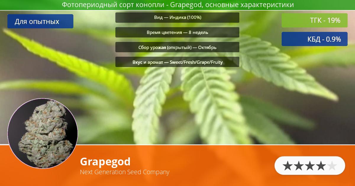 Инфограмма сорта марихуаны Grapegod