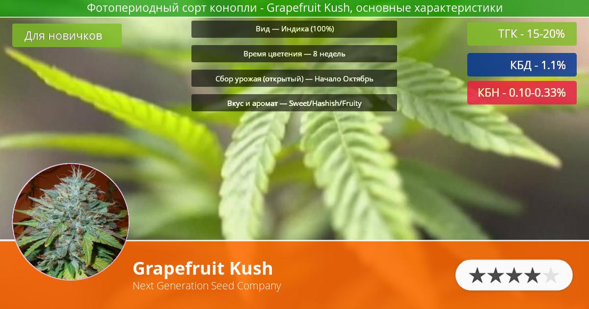 Инфограмма сорта марихуаны Grapefruit Kush