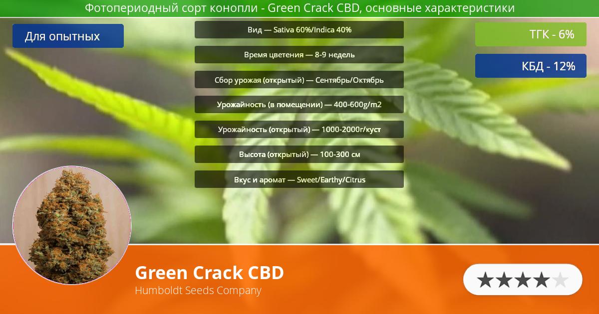 Инфограмма сорта марихуаны Green Crack CBD
