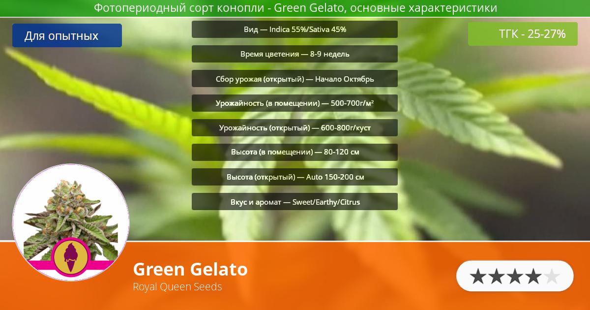 Инфограмма сорта марихуаны Green Gelato