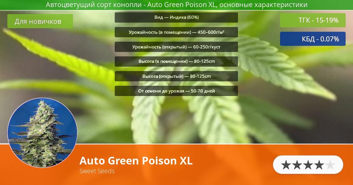 Инфограмма сорта марихуаны Auto Green Poison XL