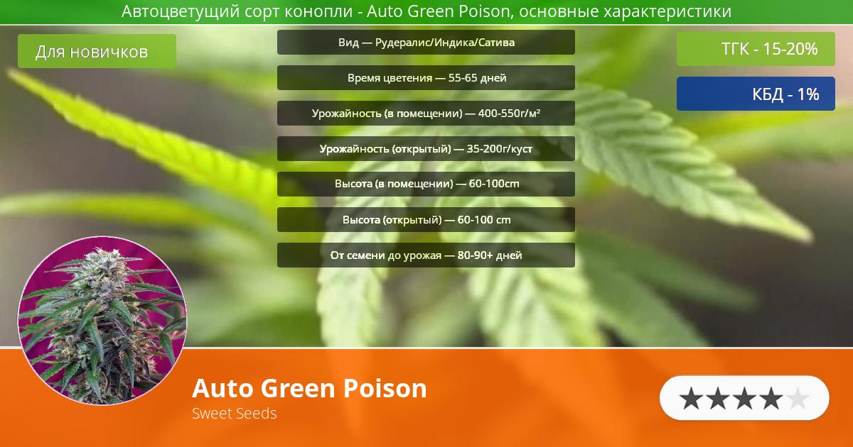 Инфограмма сорта марихуаны Auto Green Poison