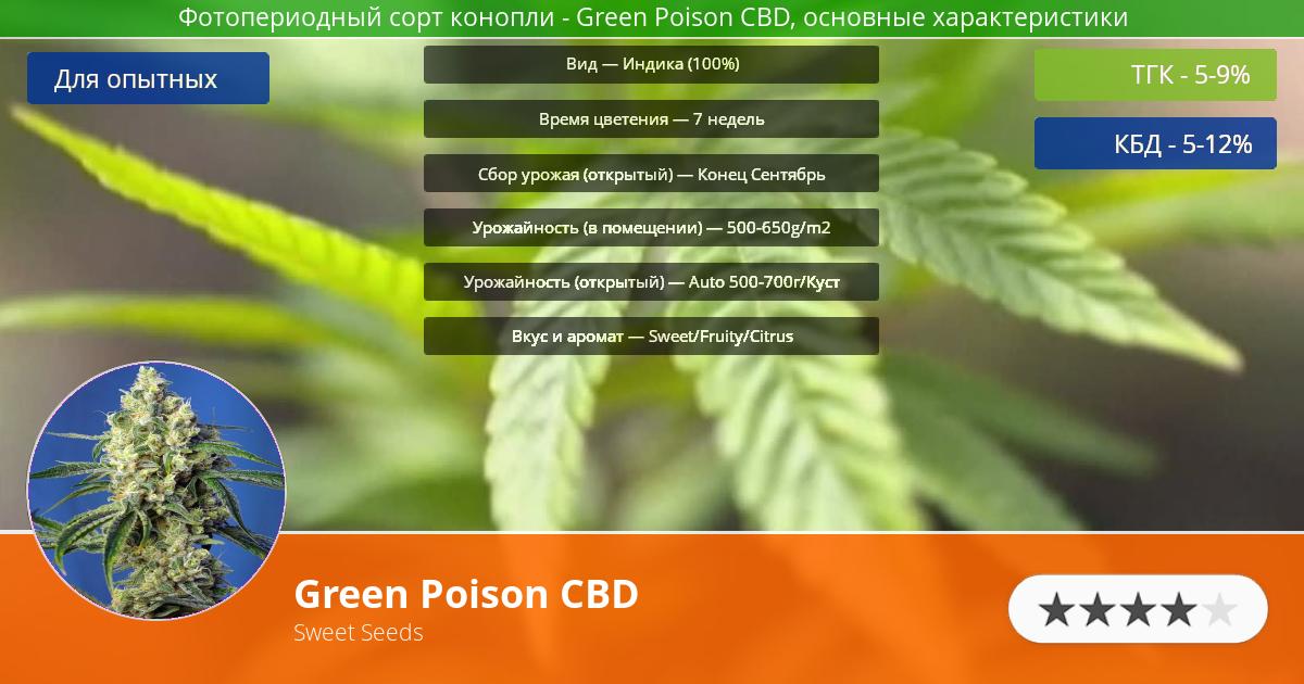 Инфограмма сорта марихуаны Green Poison CBD