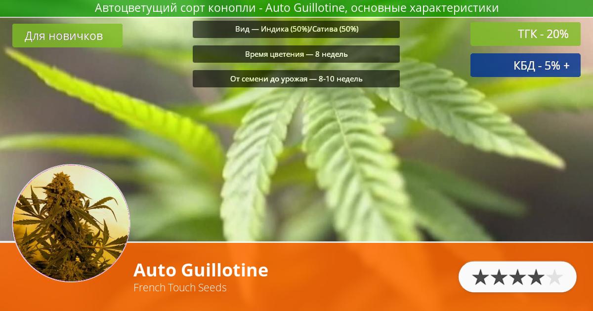 Инфограмма сорта марихуаны Auto Guillotine