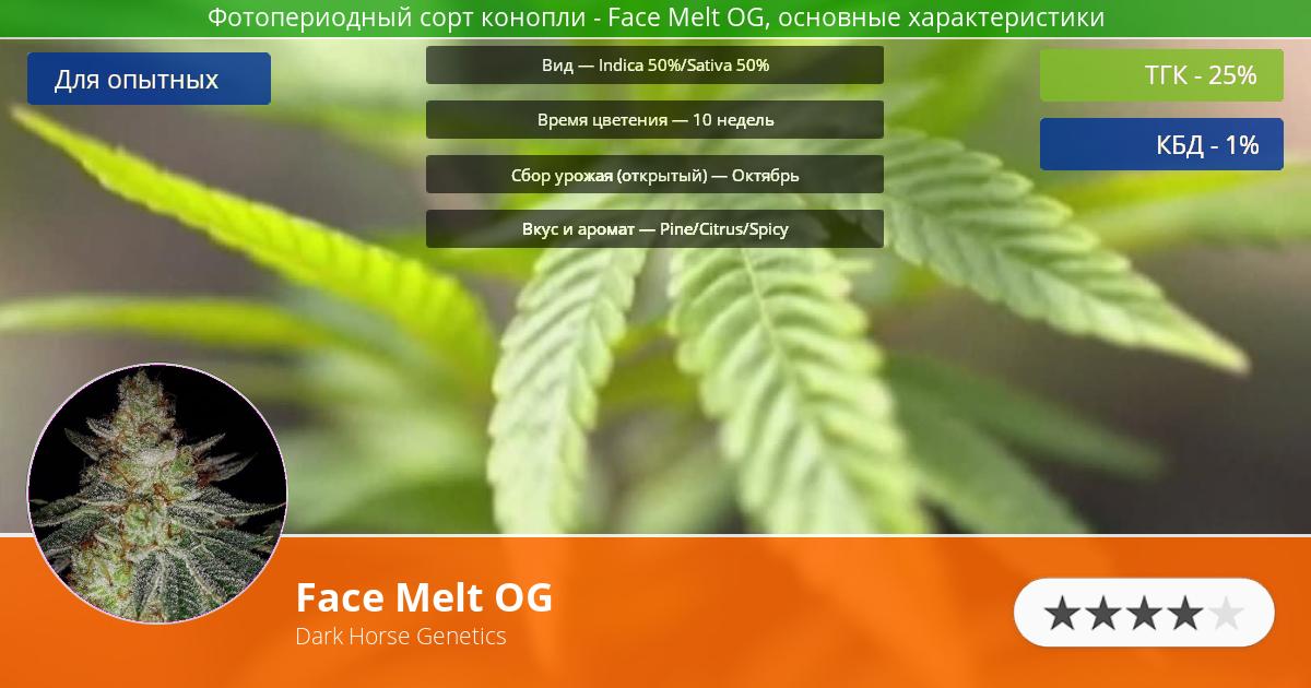 Инфограмма сорта марихуаны Face Melt OG
