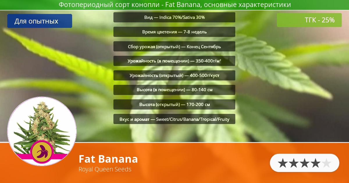 Инфограмма сорта марихуаны Fat Banana