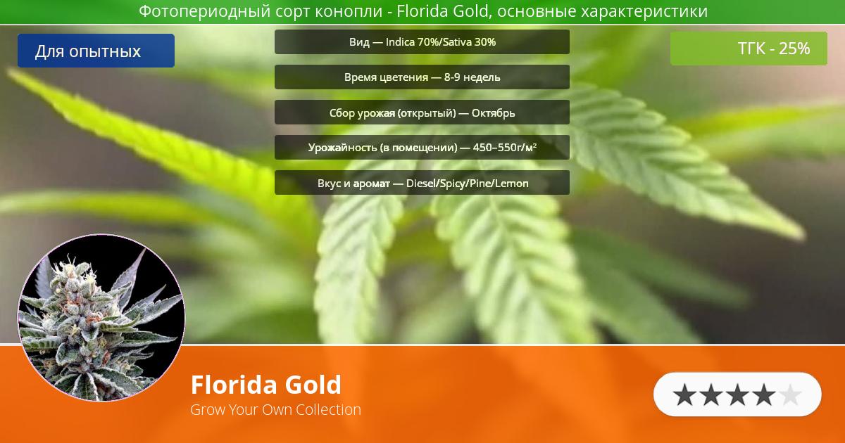 Инфограмма сорта марихуаны Florida Gold