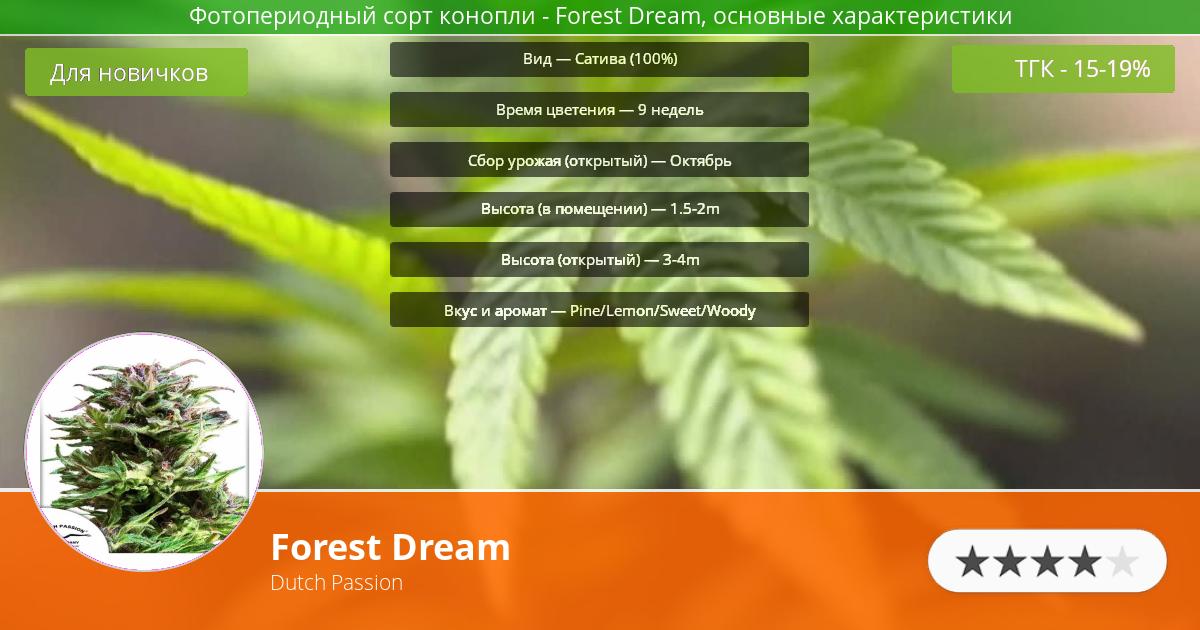 Инфограмма сорта марихуаны Forest Dream