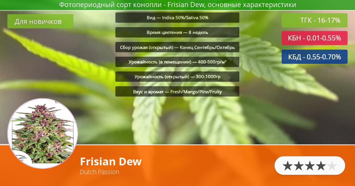 Инфограмма сорта марихуаны Frisian Dew