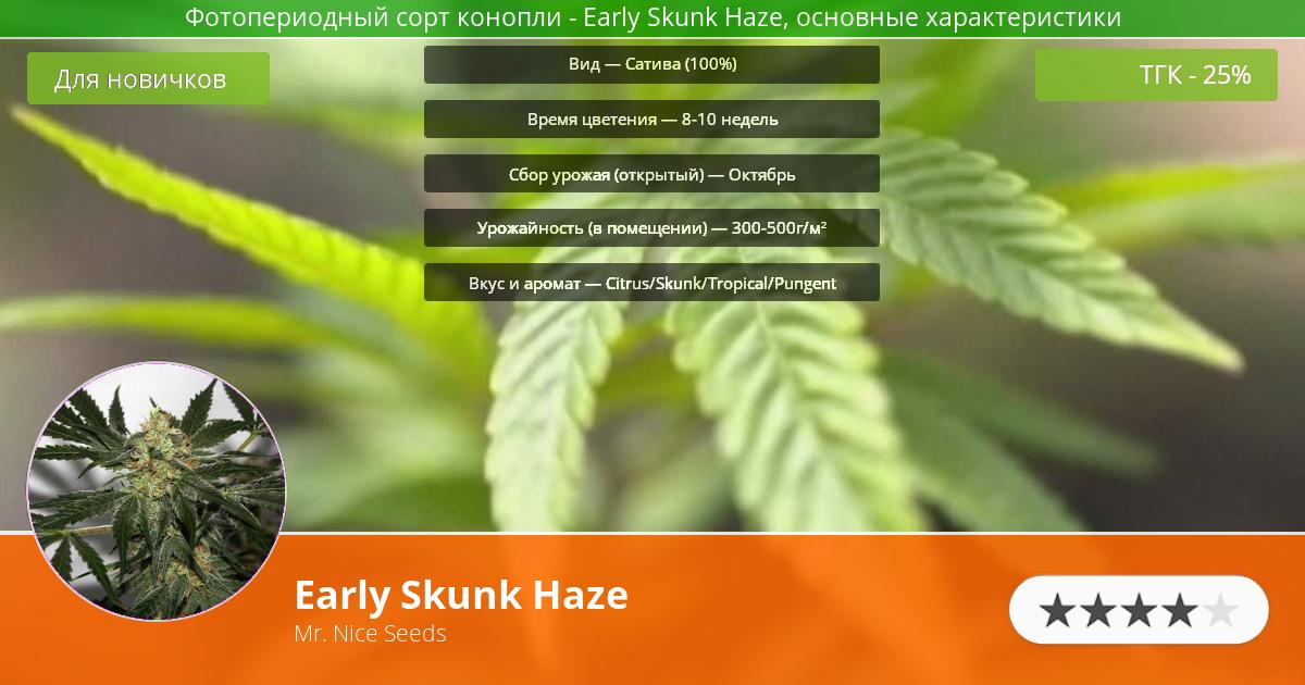 Инфограмма сорта марихуаны Early Skunk Haze