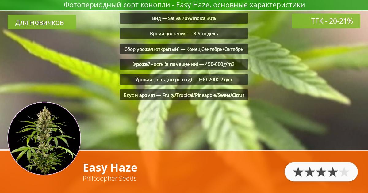 Инфограмма сорта марихуаны Easy Haze