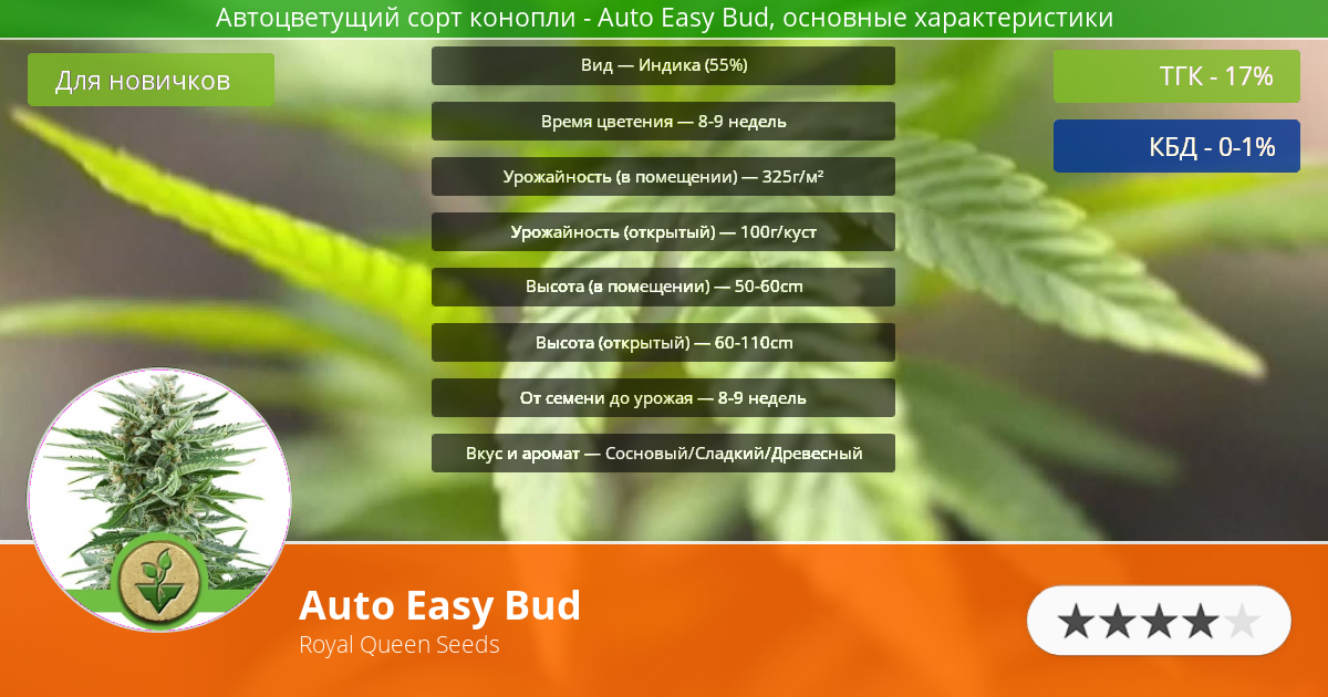 Инфограмма сорта марихуаны Auto Easy Bud