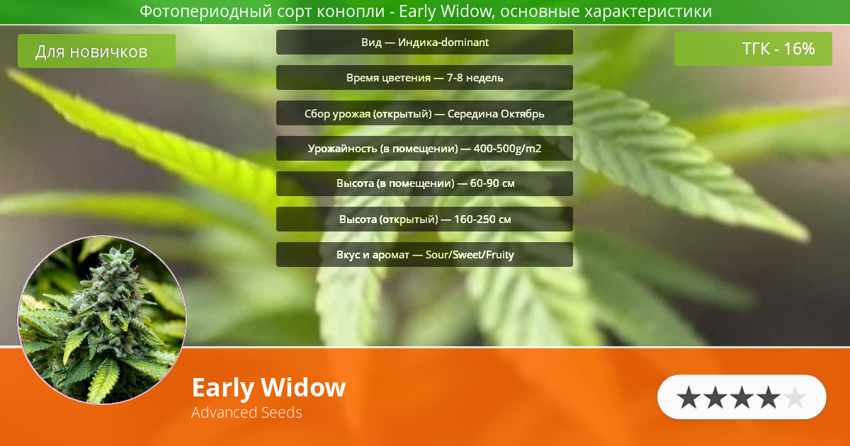 Инфограмма сорта марихуаны Early Widow