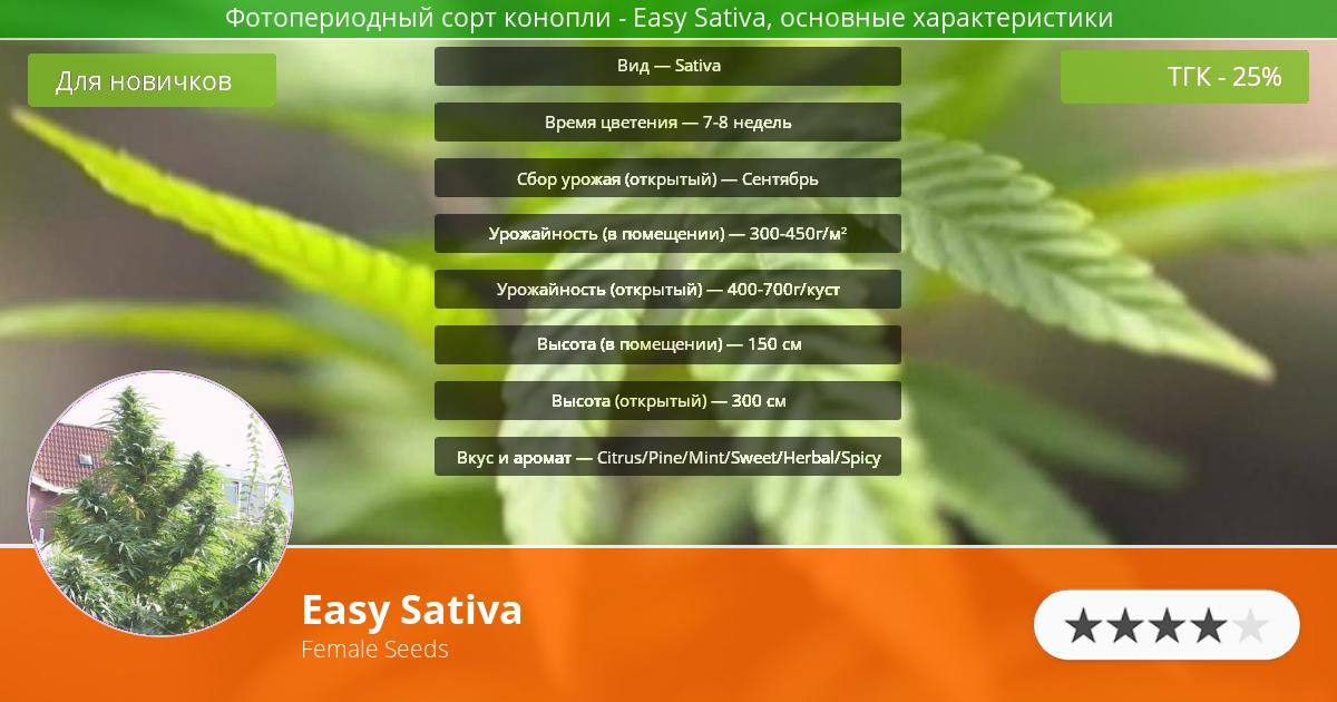 Инфограмма сорта марихуаны Easy Sativa