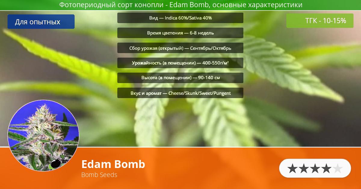 Инфограмма сорта марихуаны Edam Bomb