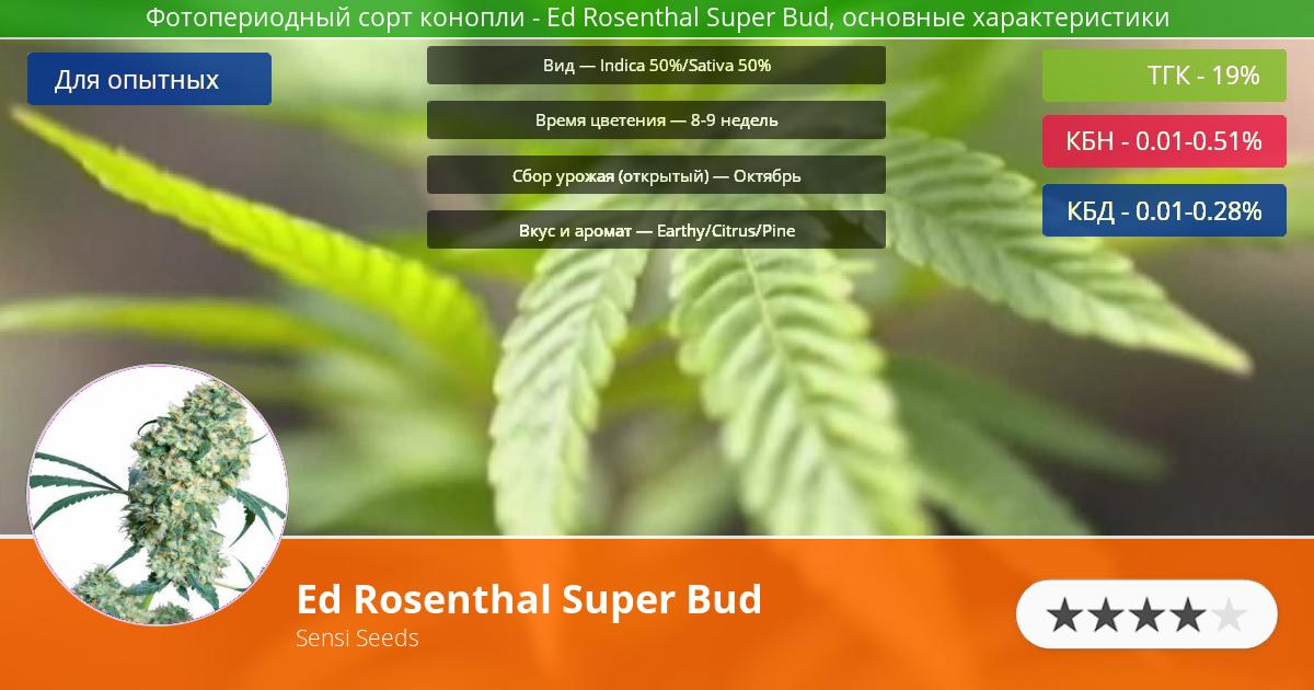 Инфограмма сорта марихуаны Ed Rosenthal Super Bud