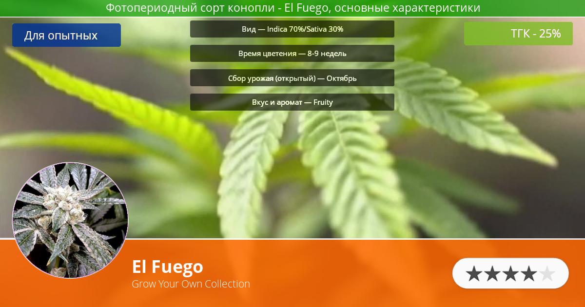 Инфограмма сорта марихуаны El Fuego