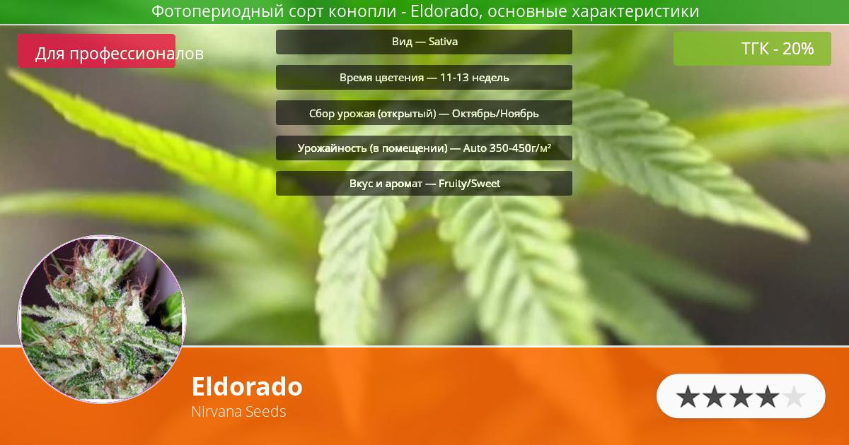 Инфограмма сорта марихуаны Eldorado