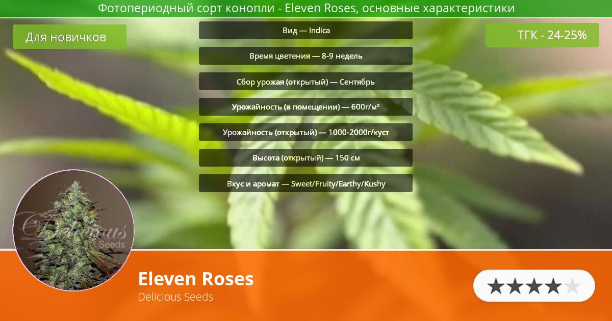 Инфограмма сорта марихуаны Eleven Roses