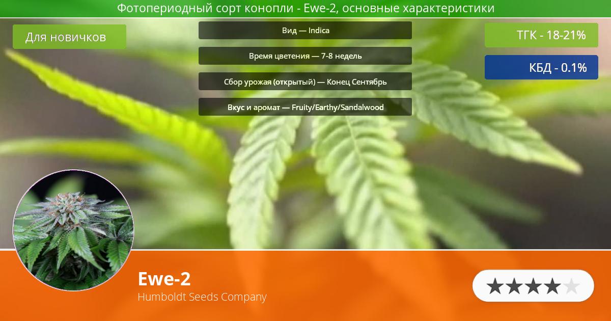 Инфограмма сорта марихуаны Ewe-2