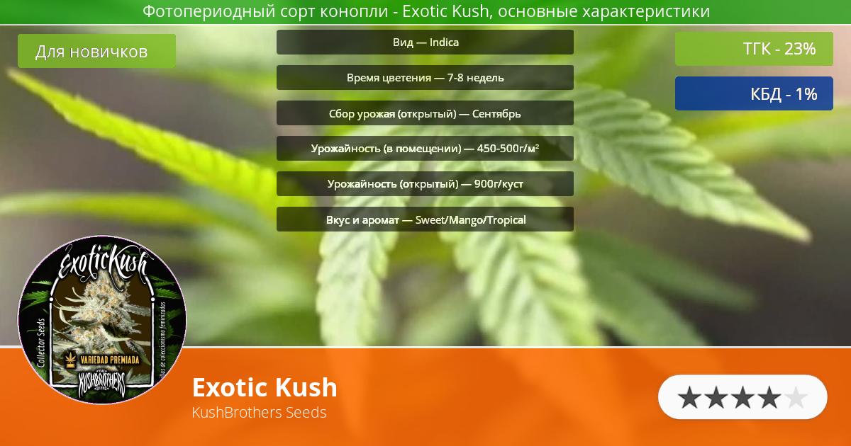 Инфограмма сорта марихуаны Exotic Kush