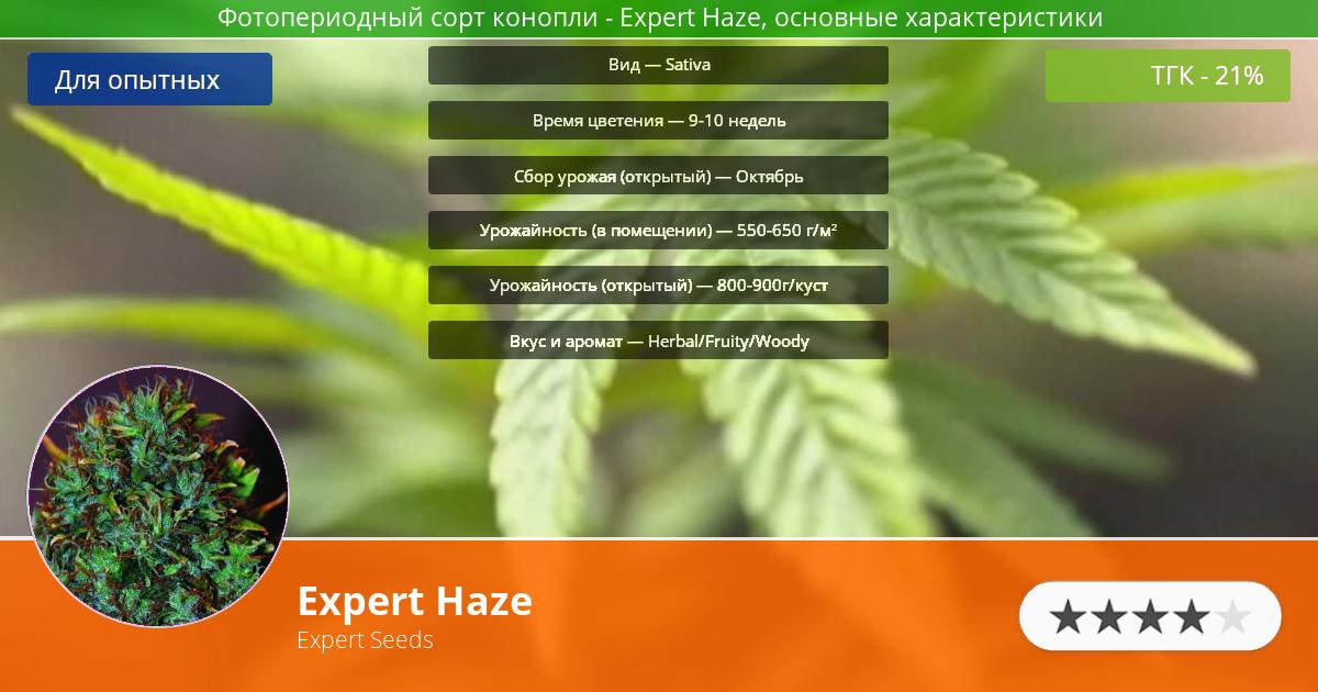 Инфограмма сорта марихуаны Expert Haze