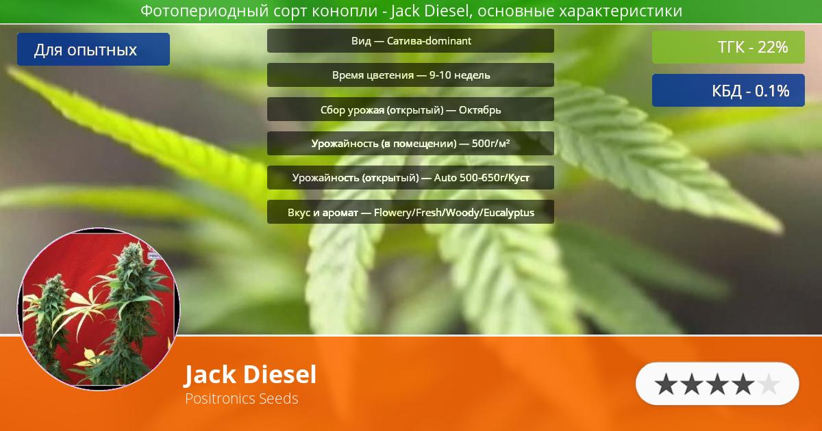 Инфограмма сорта марихуаны Jack Diesel
