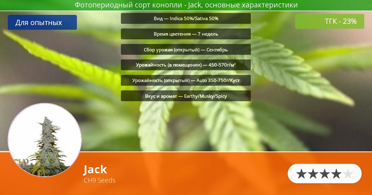Инфограмма сорта марихуаны Jack